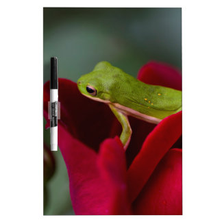 Don Juan Red Rose and Green Tree Frog Dry Erase Board