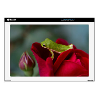 Don Juan Red Rose and Green Tree Frog Laptop Decal