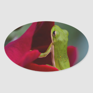 Don Juan Red Rose and Green Tree Frog Oval Sticker