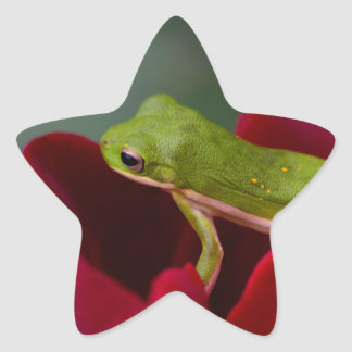 Don Juan Red Rose and Green Tree Frog Star Sticker