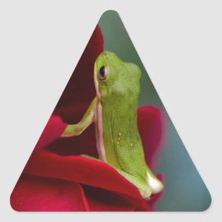 Don Juan Red Rose and Green Tree Frog Triangle Sticker