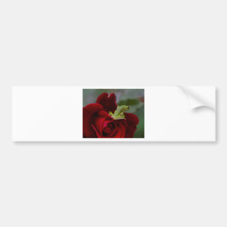 Don Juan Rose and Green Tree Frog Bumper Sticker