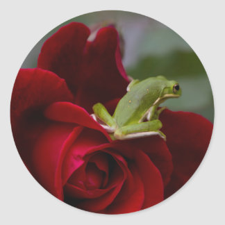 Don Juan Rose and Green Tree Frog Classic Round Sticker