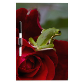 Don Juan Rose and Green Tree Frog Dry-Erase Board