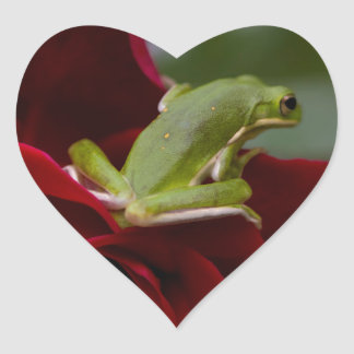 Don Juan Rose and Green Tree Frog Heart Sticker