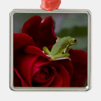 Don Juan Rose and Green Tree Frog Metal Ornament