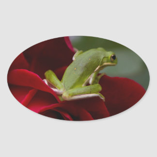 Don Juan Rose and Green Tree Frog Oval Sticker