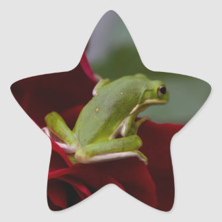 Don Juan Rose and Green Tree Frog Star Sticker