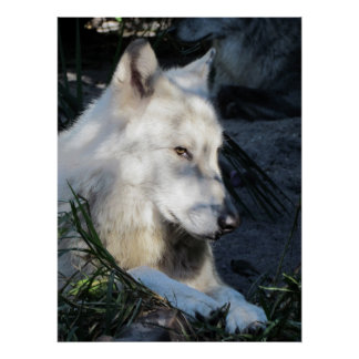 Don Juan Wolf Poster