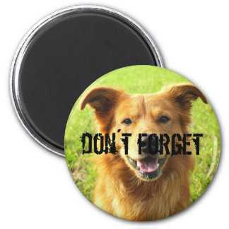don´t forget magnet for dog