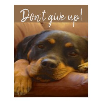 Don't Give Up! Says Sammy our Rottweiler Poster