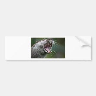 Don`t Mess With The Otter Bumper Sticker