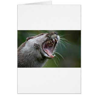 Don`t Mess With The Otter Cards