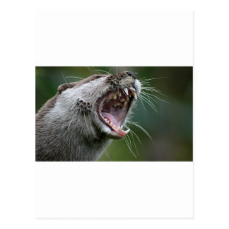 Don`t Mess With The Otter Postcard