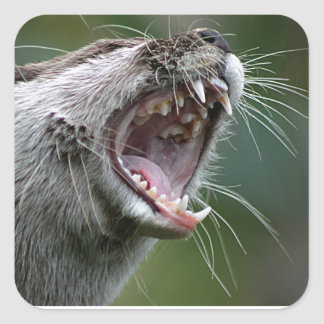 Don`t Mess With The Otter Square Sticker