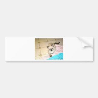 donate.jpg bumper stickers