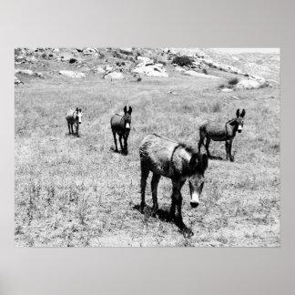 donkey 001 poster