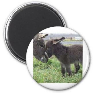 donkey 2 inch round magnet