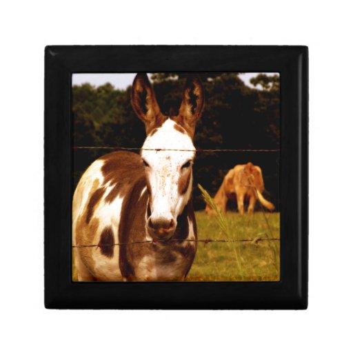 donkey-52295_1920.jpg caja de joyas