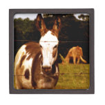 donkey-52295_1920.jpg premium trinket box