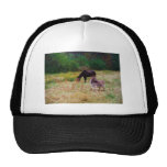 Donkey and horse in a Fall Field. Mesh Hat
