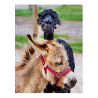 Donkey and lama postcard