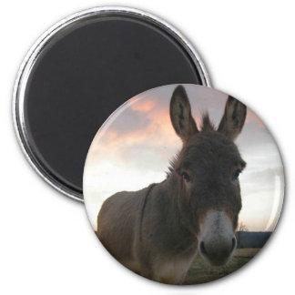 Donkey Art Refrigerator Magnets