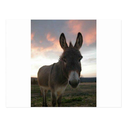 Donkey Art Postcard