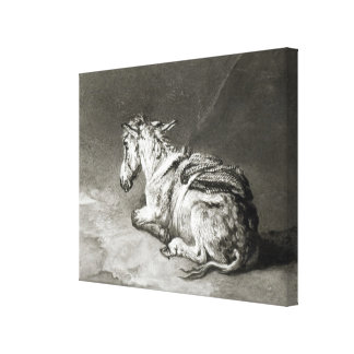 Donkey at Rest Gallery Wrap Canvas