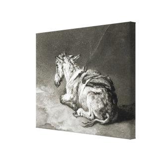 Donkey at Rest Canvas Print
