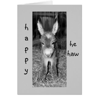 "DONKEY BABY SAYS HAPPY ""HE HAW"" BIRTHDAY TO YOU GREETING CARD"