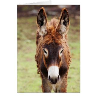 Donkey Bad Hair Day Greeting Card