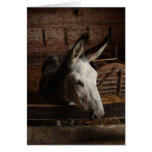 donkey card