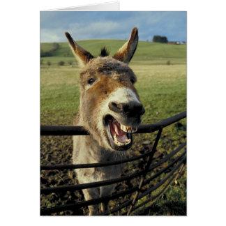 Donkey Greeting Cards