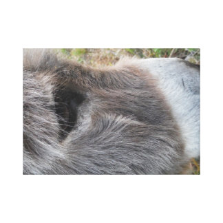 Donkey  Close - Up of Face Canvas Print