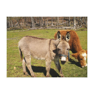 Donkey/Cow Stretched Canvas Print