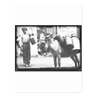 Donkey Delivery Postcard