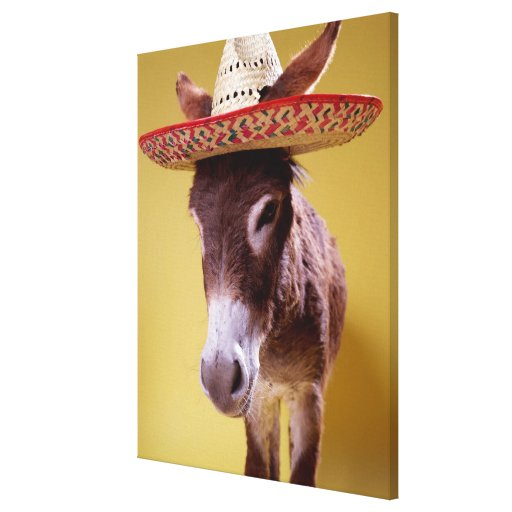 Donkey (Equus hemonius) wearing straw hat Stretched Canvas Print