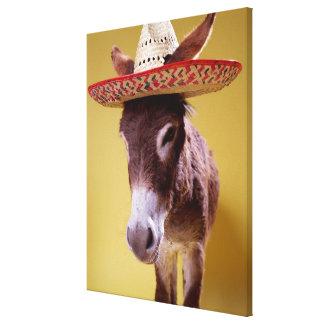 Donkey (Equus hemonius) wearing straw hat Canvas Print