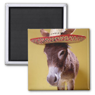 Donkey (Equus hemonius) wearing straw hat 2 Inch Square Magnet