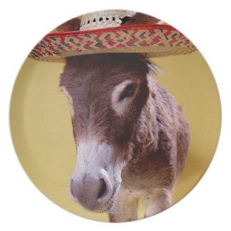 Donkey (Equus hemonius) wearing straw hat Plates