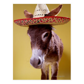 Donkey (Equus hemonius) Wearing Straw Hat Postcards