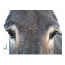 Donkey Eyes Postcard