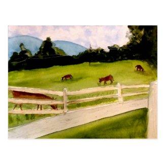 Donkey Farm Memories Postcard