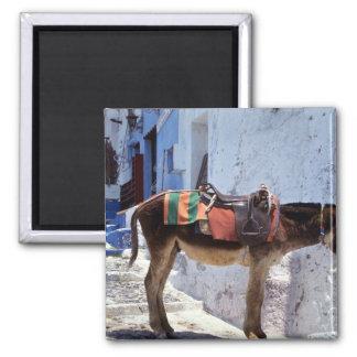 Donkey Fira Santorini Greece Magnet