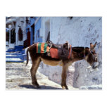 Donkey, Fira Santorini, Greece Postcard