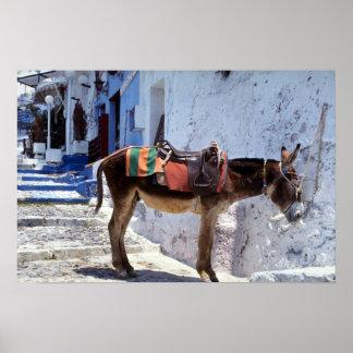 Donkey, Fira Santorini, Greece Poster