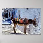 Donkey, Fira Santorini, Greece Print