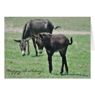 Donkey foal birthday card
