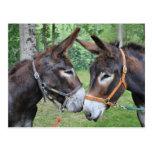Donkey friends postcard